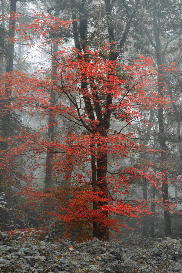 Beautiful surreal alternate color fantasy Autumn Fall forest lan stock image