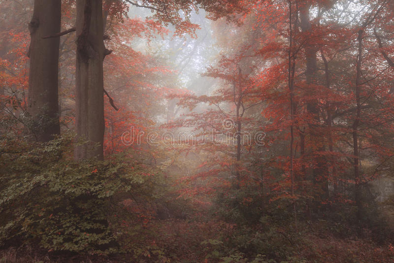 Beautiful surreal alternate color fantasy Autumn Fall forest lan royalty free stock images