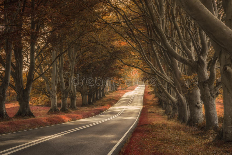 Beautiful surreal alternate colored forest landscape stock images