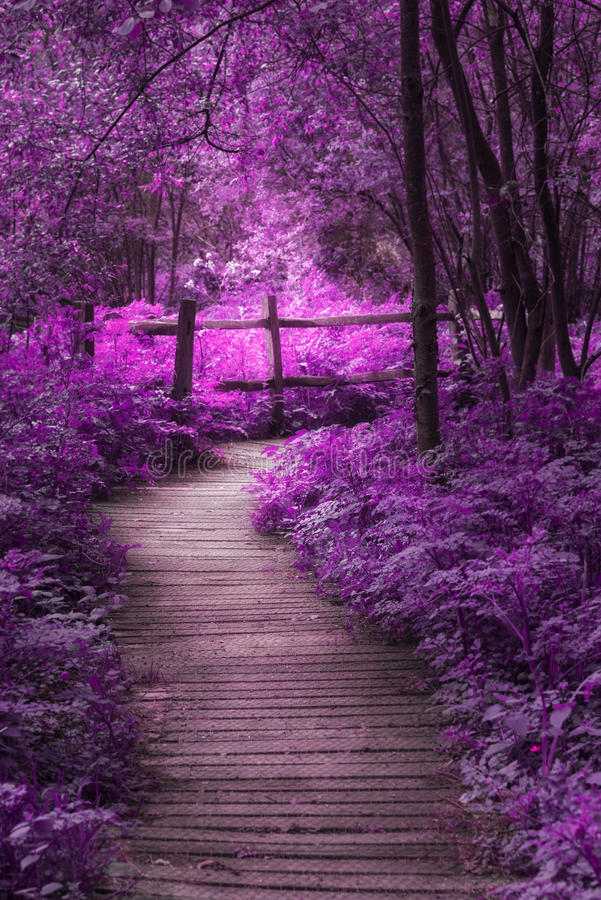 Beautiful surreal purple landscape image of wooden boardwalk throughforest in Spring royalty free stock photography