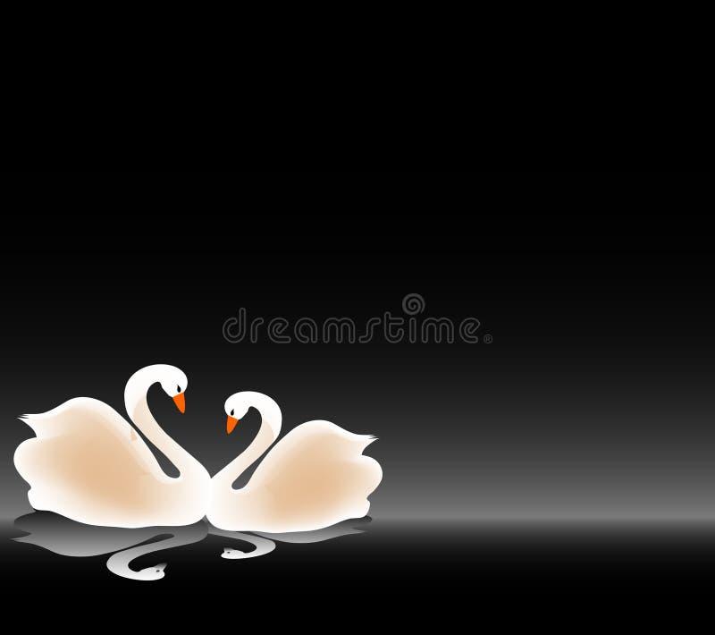 Beautiful swan in love
