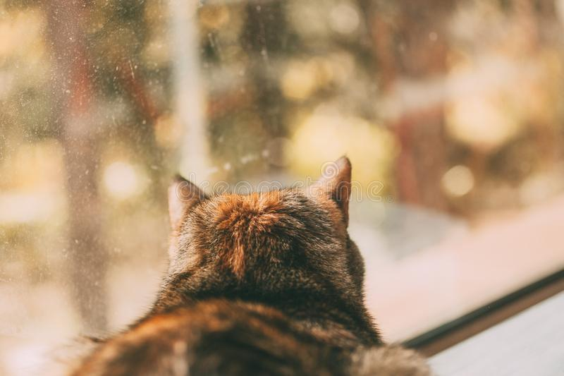 Beautiful tabby cat looking through the window. Back portrait. Beautiful short haired cat. Domestic animals and pets concept stock photo