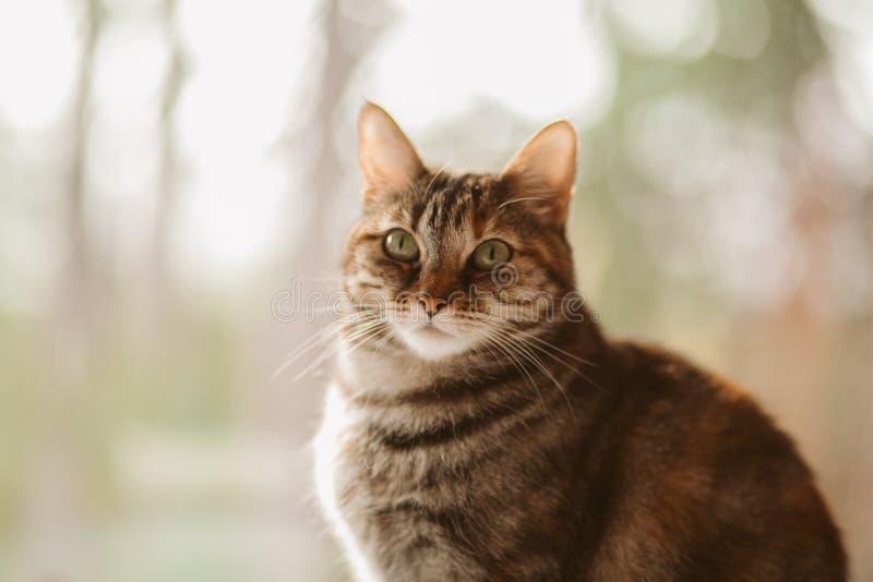 Beautiful tabby cat portrait near a window. Domestic cat posing. Domestic animals concept. European cat stock photos