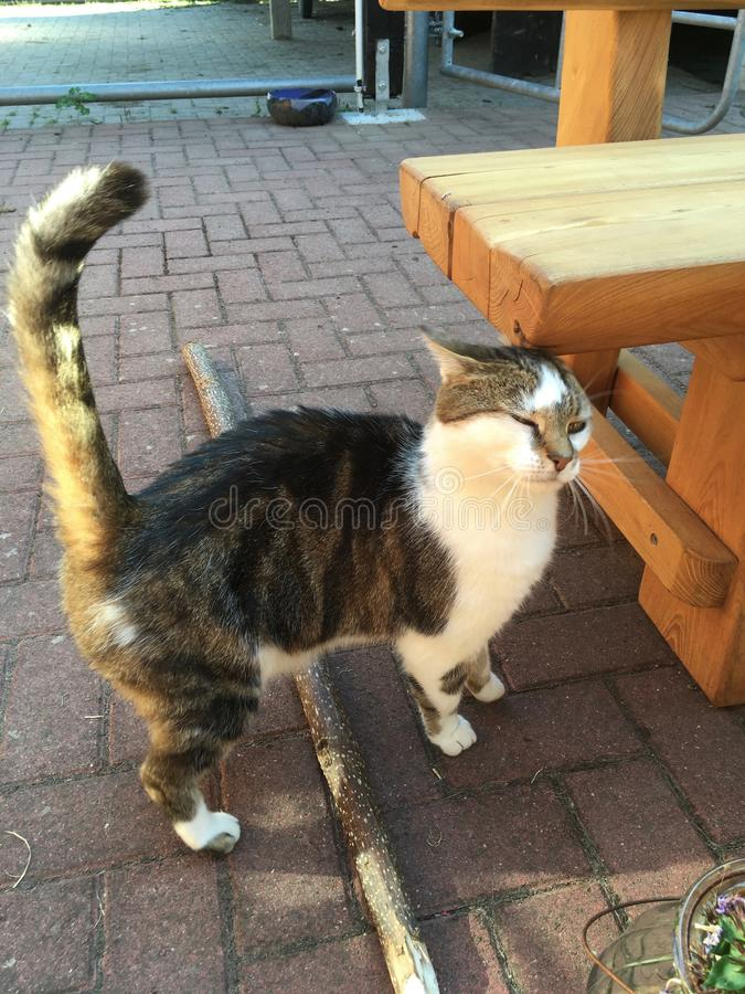 Beautiful tabby squeezes Cat pushs her head against a wooden table in the garden.. stock photography