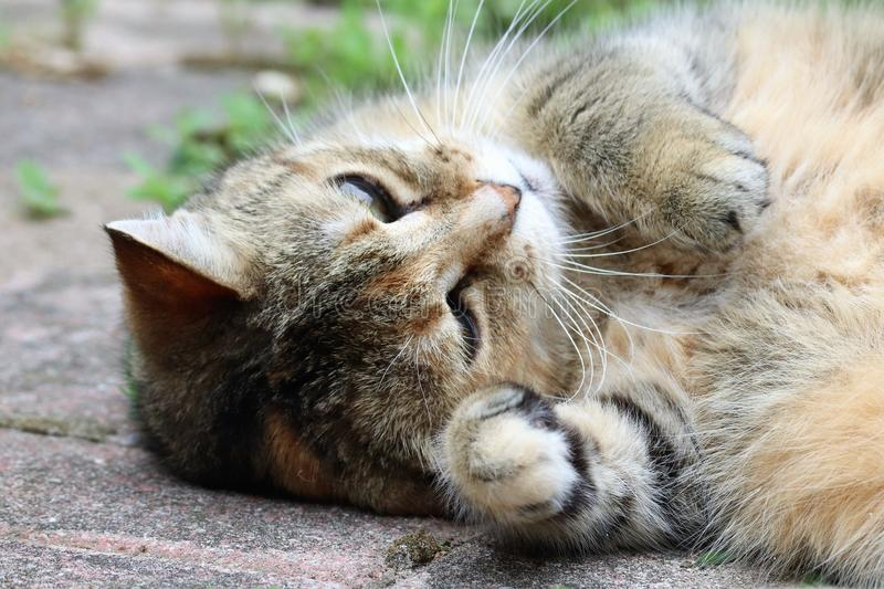 A beautiful tabby cat just a chillin` out on a beautiful day stock images