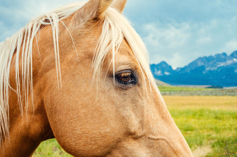 Beautiful tan horse in field with mountains and clouds stock images