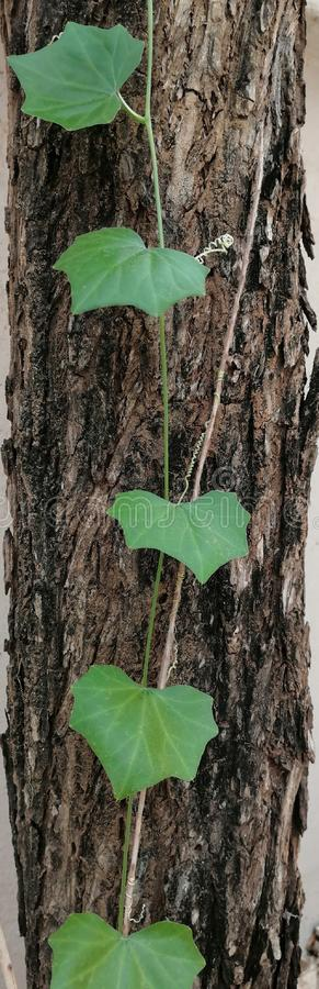 Beautiful teen fresh leaves on a trunk of a tree. stock photography