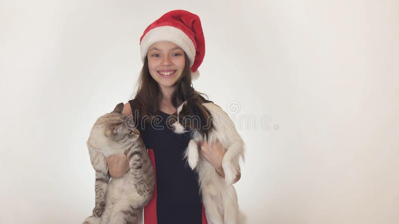 Beautiful teen girl in Santa Claus hat hugs her cat and dog on white background royalty free stock photos