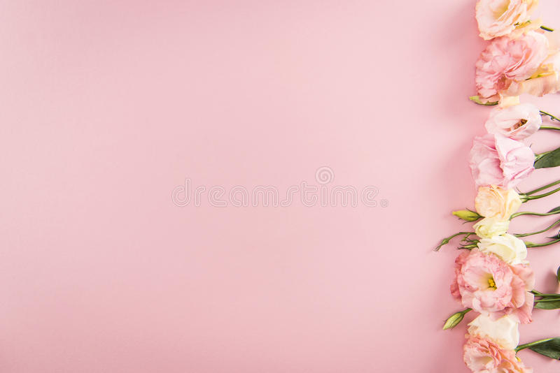 Beautiful tender blooming eustoma flowers isolated on pink background stock photo