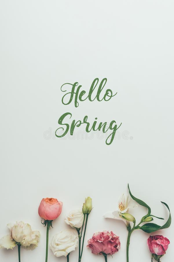Beautiful tender blooming flowers and inscription hello spring royalty free stock photo