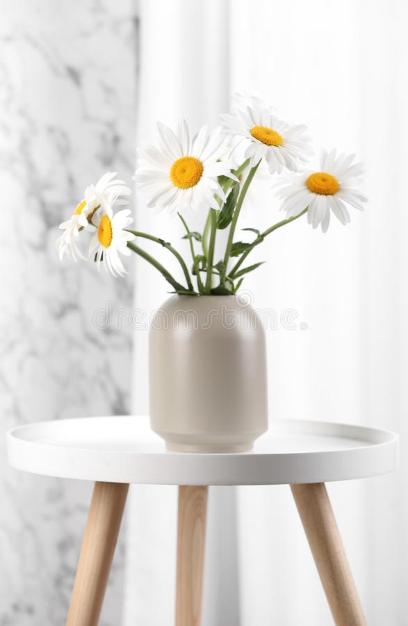 Beautiful tender chamomile flowers in vase on table indoors royalty free stock image
