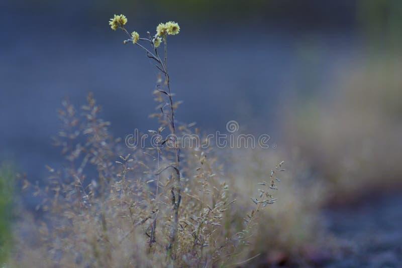 Beautiful tender yellow flower stock photo