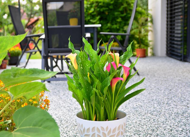 Beautiful Terrace with Decorative Potted Flower royalty free stock photography