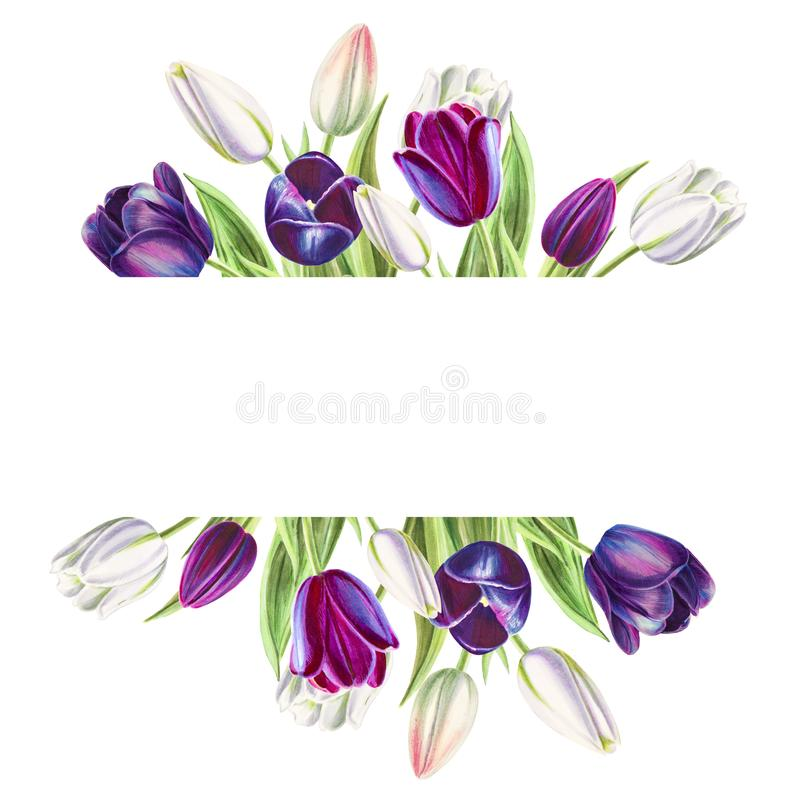 Beautiful text frame from white and black tulips. Marker drawing. Watercolor painting. royalty free illustration