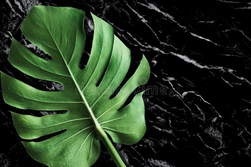 Beautiful texture of black marble stone with monstera leaf. For decorative presentation ideas royalty free stock photo