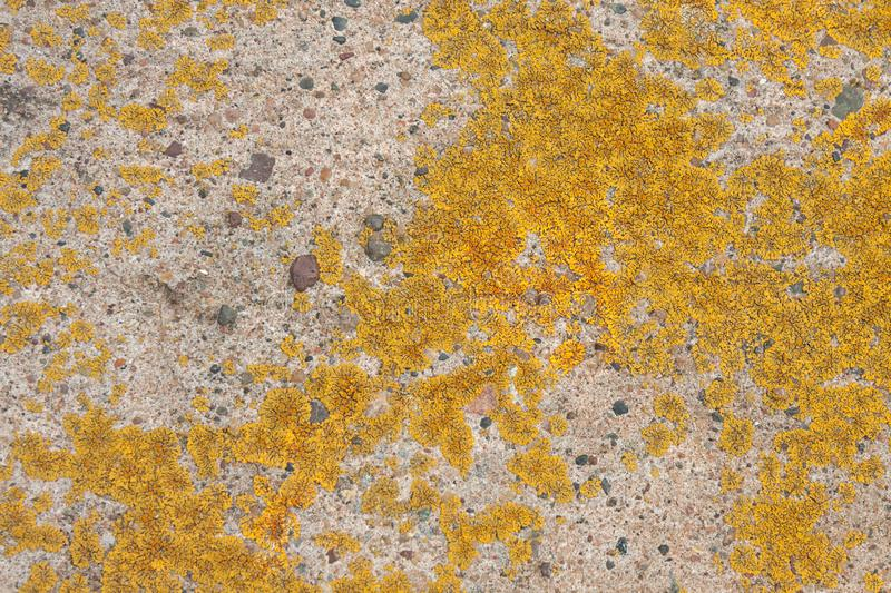 Colorful Lichen Grows on Concrete. A beautiful texture of living and dying lichen growing on a limestone rock in Bayfield Wisconsin stock photography