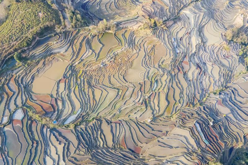 Beautiful texture of terraced fields royalty free stock photography