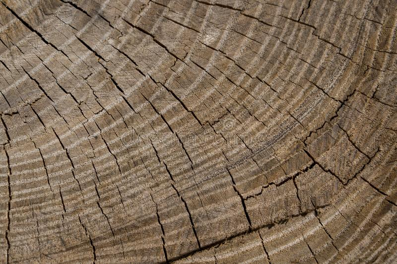 Beautiful texture of tree saw cut with annual rings and checks. Vintage backgroud royalty free stock photos