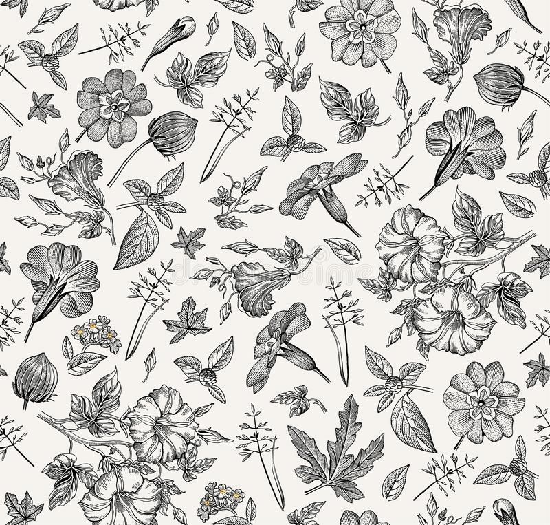 Seamless pattern. Realistic isolated flowers. Vintage background Petunia primavera hibisc Drawing engraving Vector. Beautiful thanks white blooming realistic vector illustration