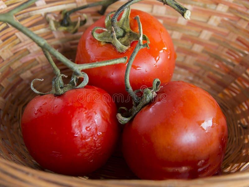 Beautiful tomatoes stock photo