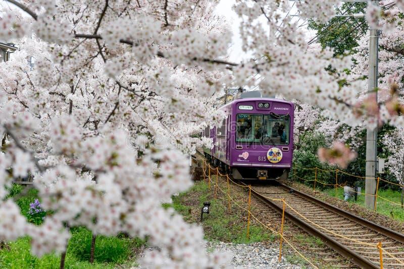 Beautiful train and sherry blossom. royalty free stock photos