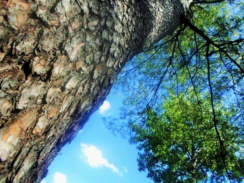 Beautiful tree angled sky view royalty free stock images