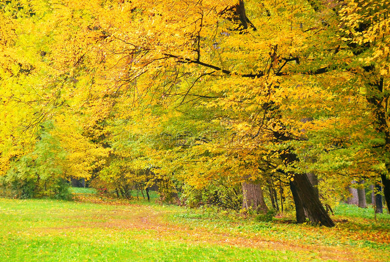 Download Beautiful Tree In Autumn Park Stock Photo - Image: 27465508