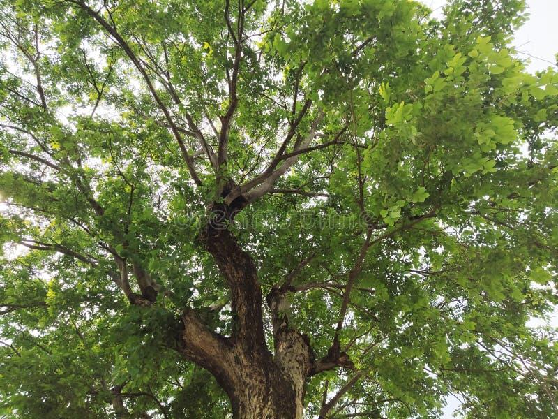 Beautiful tree. stock images