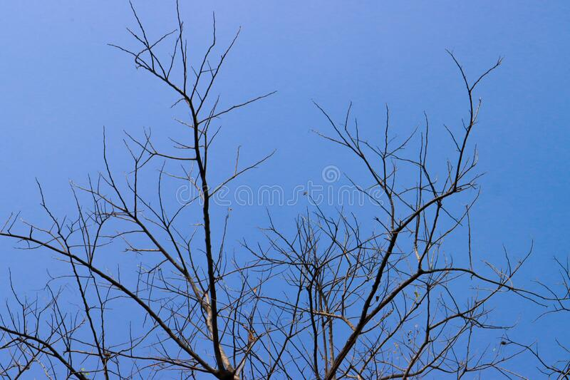 Beautiful tree on blue sky background. Wallpaper stock photography