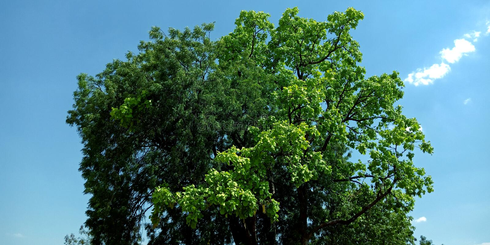 Beautiful tree with blue sky background photo stock photo
