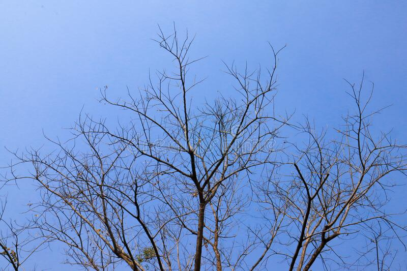 Beautiful tree on blue sky background. Wallpaper royalty free stock photos