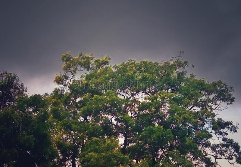 A green tree with stormy sky background royalty free stock images
