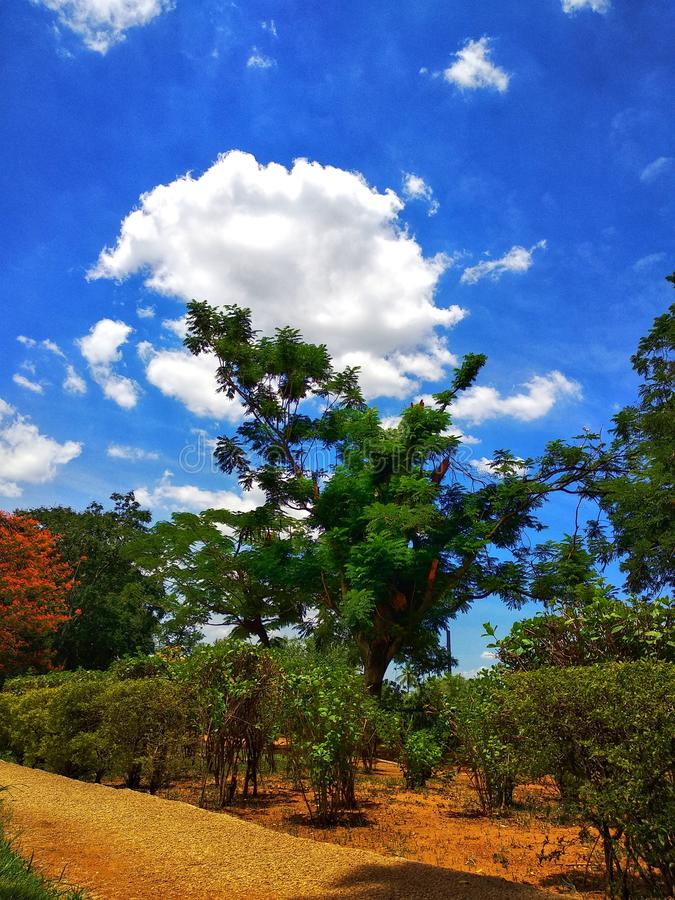 Beautiful tree and clouds background image by WandererPhotography stock photography