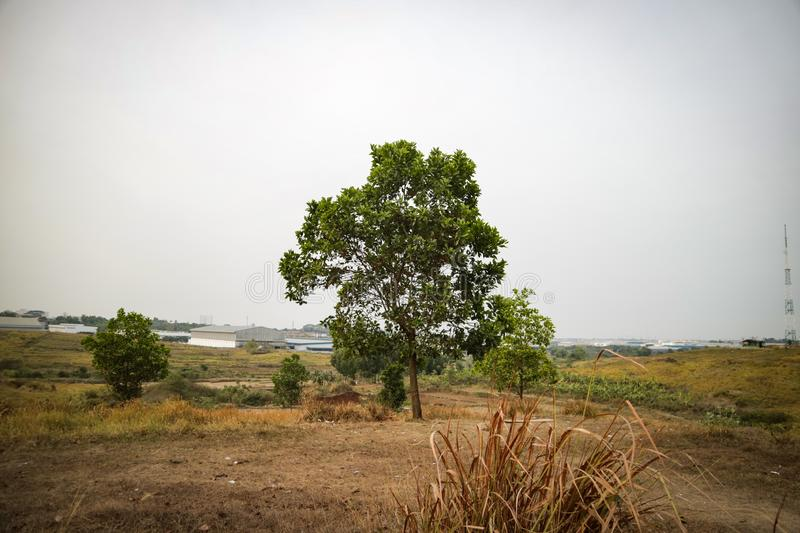 Beautiful tree on the hill with grass in the foreground. Beautiful trees on the hill with grass in the foreground, photos taken in the city of Bekasi - Indonesia stock photos