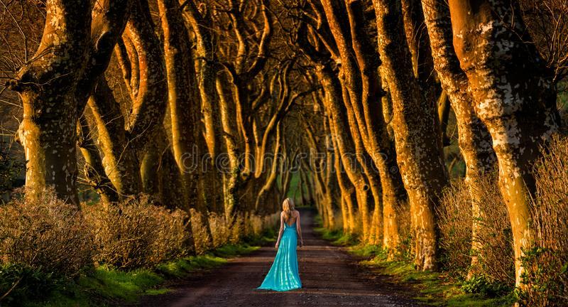 Beautiful blonde woman in turquoise long dress walks away in the middle of a tree lined forest road. Beautiful tree lined alley, sunset lights and long dressed royalty free stock photography