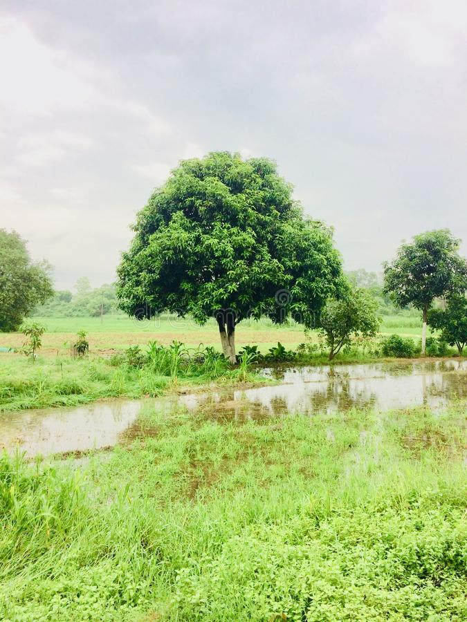 Beautiful tree and beautiful scene. This is India picture beautiful tree and so very beautiful scence wonderful nice stock images