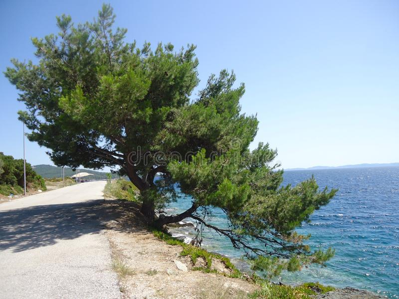 Beautiful tree by the sea in Greece royalty free stock image
