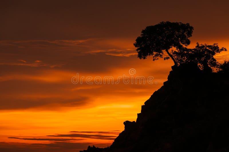 Download Beautiful tree at sunrise stock photo. Image of field - 30746610
