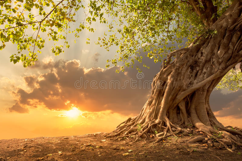Beautiful tree at sunset vibrant orange with free copy space. stock photo