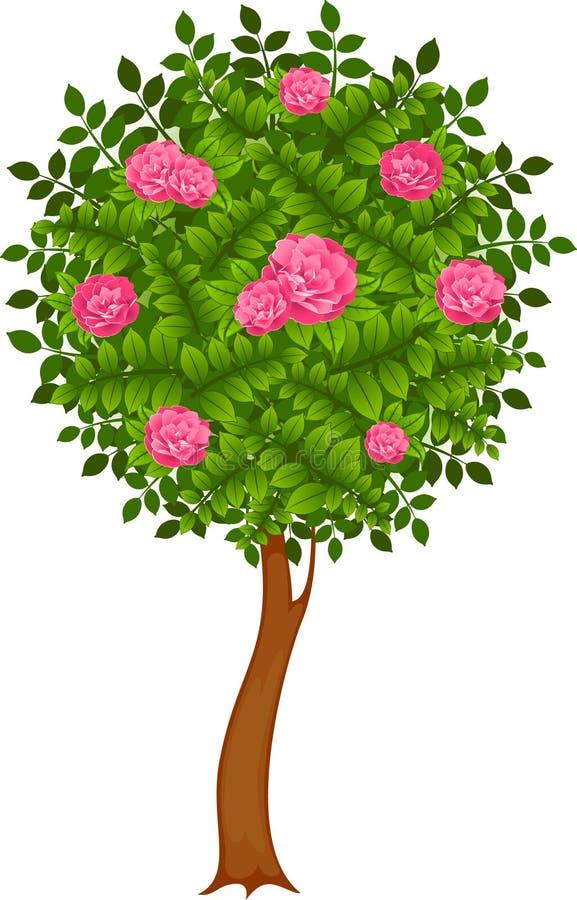 Beautiful trees vector illustration