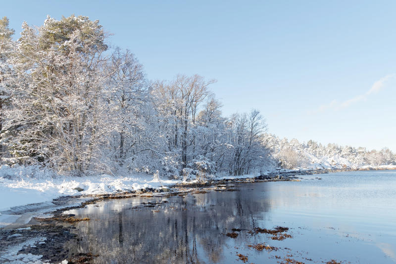 Beautiful trees covered with snow reflecting in the water. In the wintry archipelago stock images