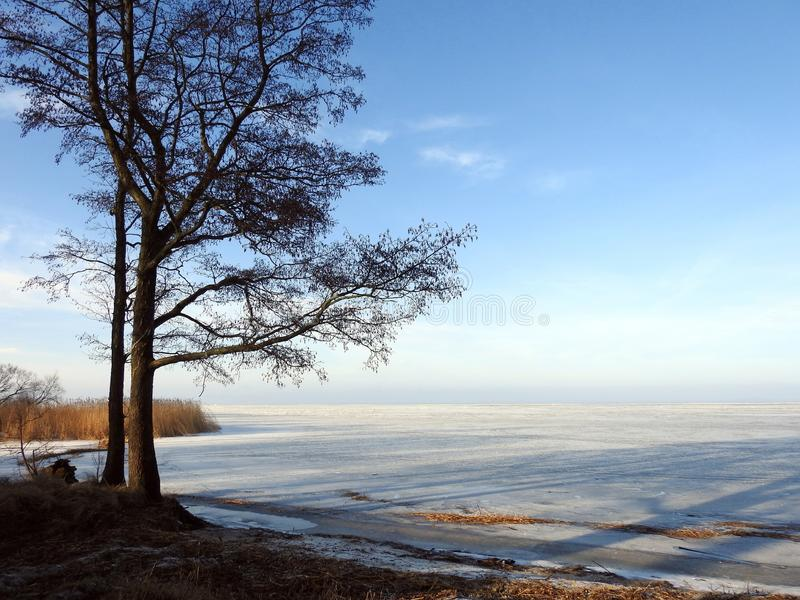 Trees on Curonian spit shore, Lithuania. Beautiful trees on Curonian spit shore in spring sunny day stock image