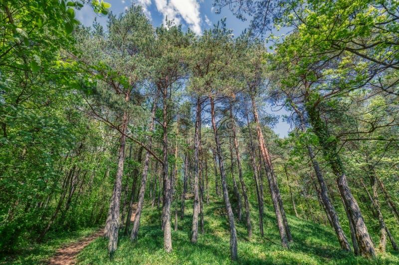 Beautiful trees on daylight at swiss alps stock image