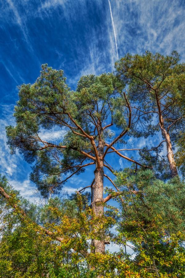 Beautiful trees on daylight at swiss alps royalty free stock images