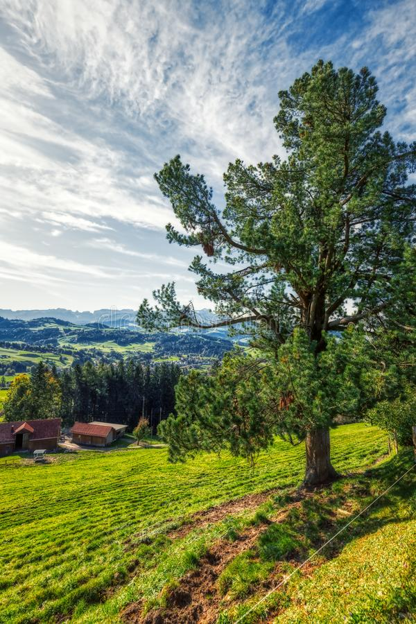 Beautiful trees on daylight at swiss alps royalty free stock photos