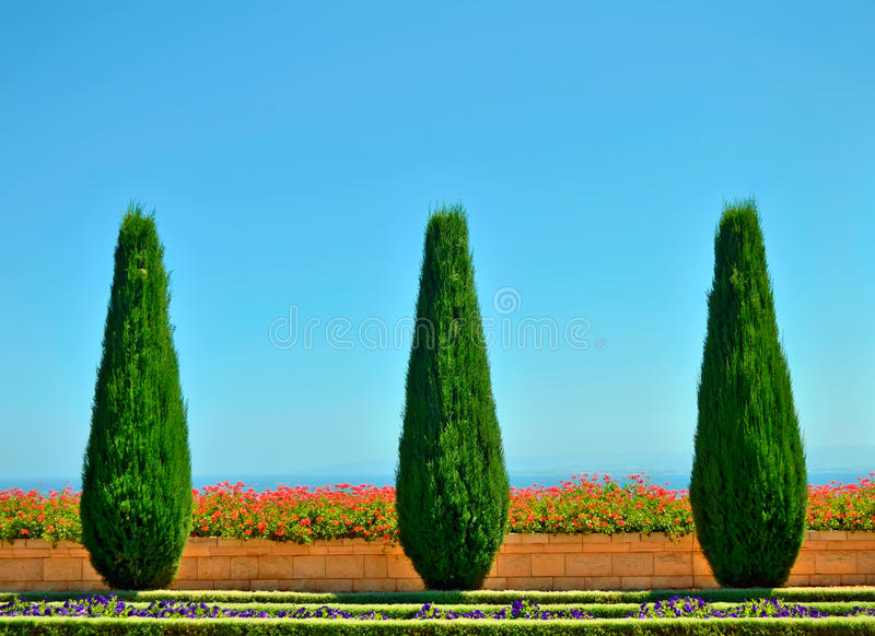 Beautiful trees and flowers in the Bahai Gardens stock photography