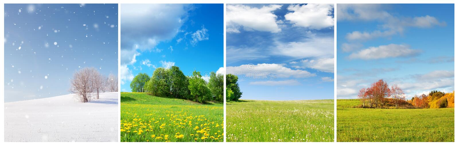 Beautiful trees in four seasons landscape on the field. Spring, summer, autumn and winter collage royalty free stock photo