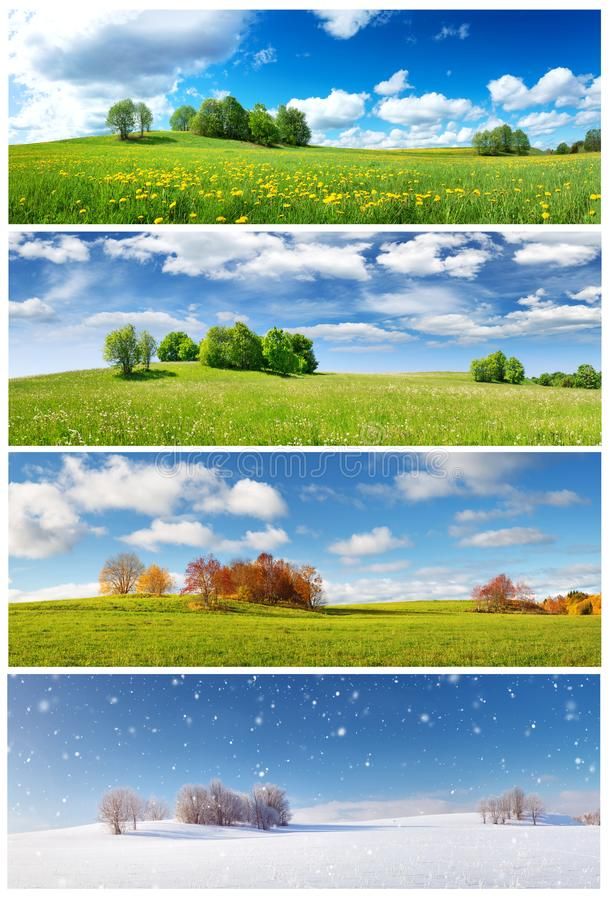 Beautiful trees in four seasons landscape on the field. Spring, summer, autumn and winter collage stock photography