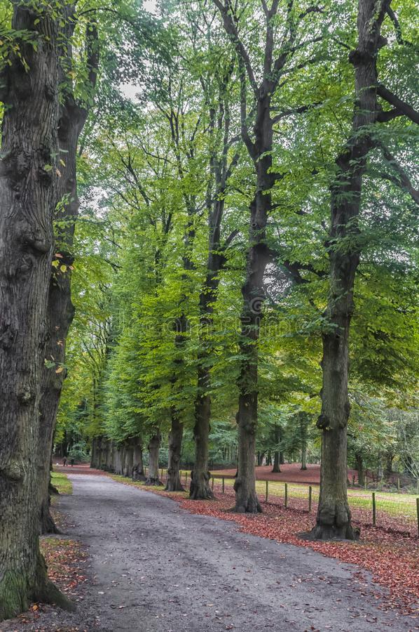 Beautiful trees lined up in a park royalty free stock photography
