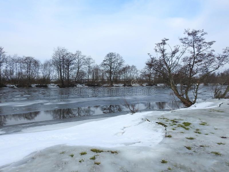 Beautiful trees near river , Lithuania royalty free stock photo